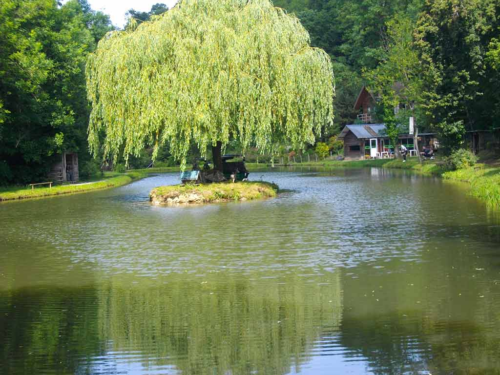 Piscine bassins saint etienne 1229 5 - Bassin canard beton orleans ...
