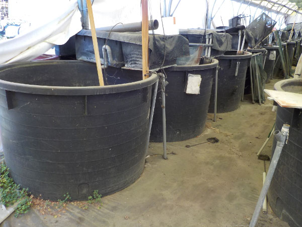 Offres de mat riels et mat riaux pour l 39 aquaculture for Bassin poisson exterieur hors sol